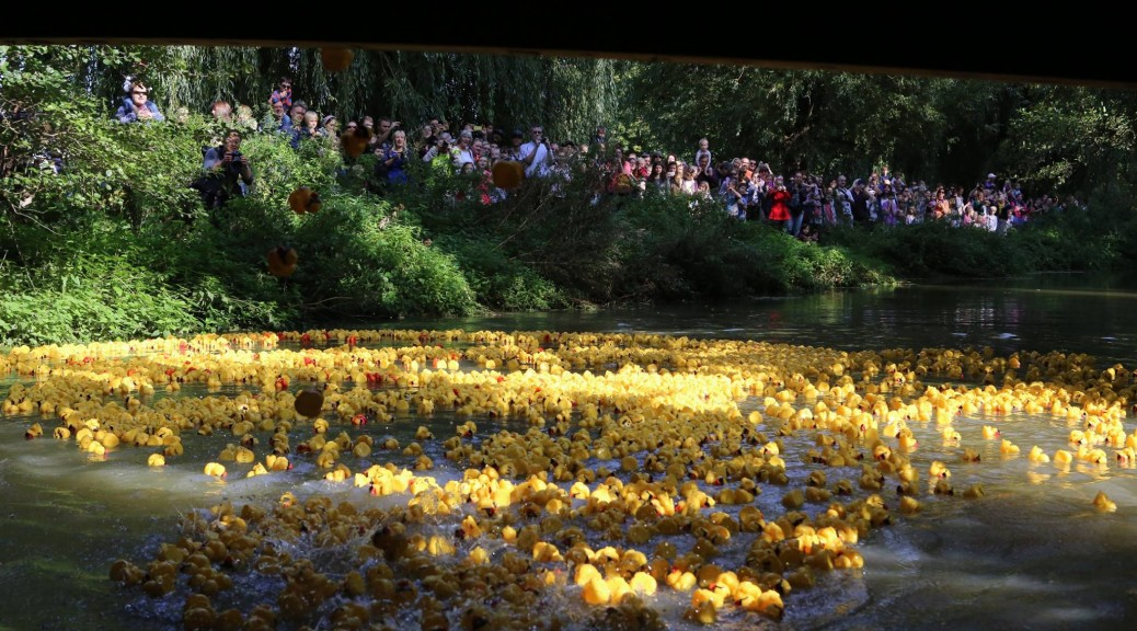 Canterbury Duck Race 2016